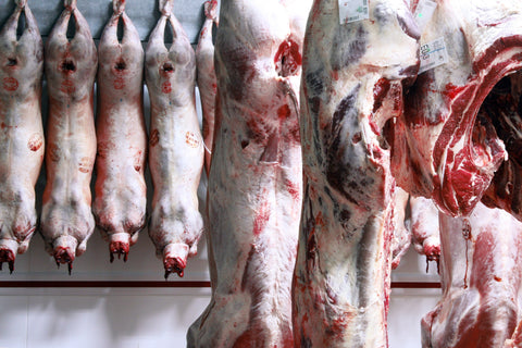 Whole lamb carcasses hanging in large walk in chiller