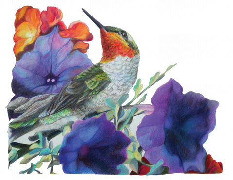 "Ruby Throat Hummingbird ""Pointed Remark"" - Watercolor Paper Print ( 14' w x 11' h )"