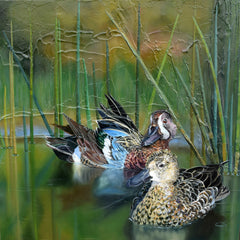 "Blue Wing Teal Ducks ""Happenstance"" - Watercolor Paper Print ( 20"" h x 20"" w )"