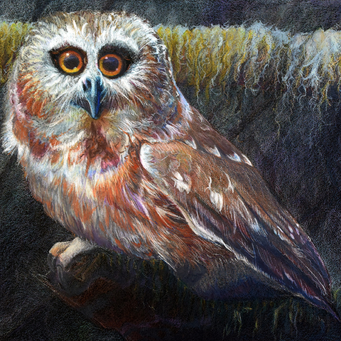 "Saw-whet Owl - Original Artwork Prismacolor On Paper ( 8.75"" h x 13.5"" w )"