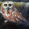 Original Owl Artwork - Saw-whet Owl