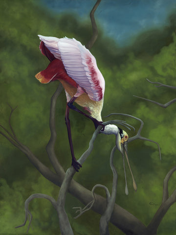 """Twisted Point of View"" - Roseate Spoonbill Art- Giclee Print ( 24""h x 18""w )"