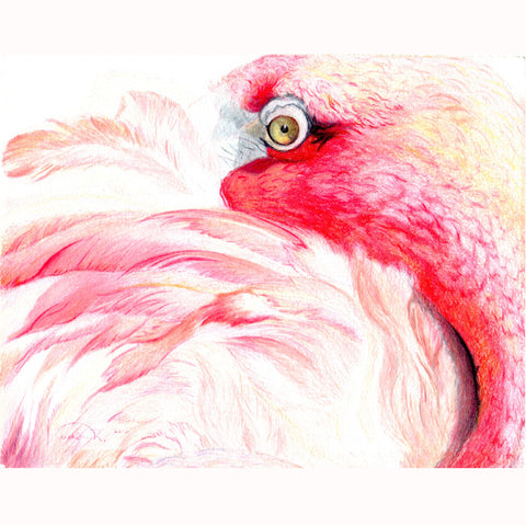 "Pink Flamingo ""Tucking In"" - Giclee Print ( 14' w x 11' h )"