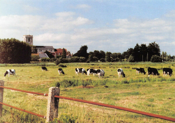 New Postcard Wareham Dorset Parish & Priory Church of Lady St. Mary, Field, Cows