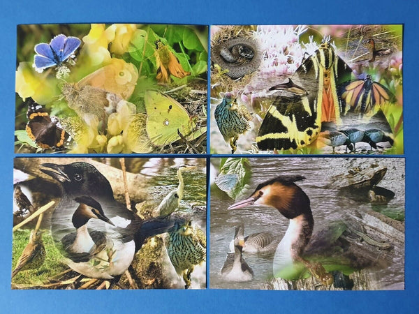 Set of 4 NEW British Wildlife Collage Postcards Photography by Ian Rabjohns BJ3