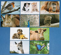Set of 10 NEW Animal Postcards great for Postcrossing & Postcardsofkindness