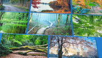 Set of 10 NEW Trees & Woodland Postcards for Postcrossing & Postcardsofkindness