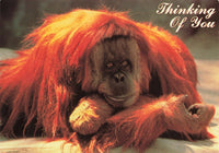 Greetings Postcard, Thinking of You, Orangutan, Monkey JQ4