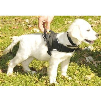 Dean and Tyler Lightweight Nylon Dog Harness