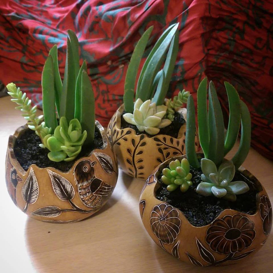 Global Gifts at Nora: How to Care for Succulent Plants and Cacti