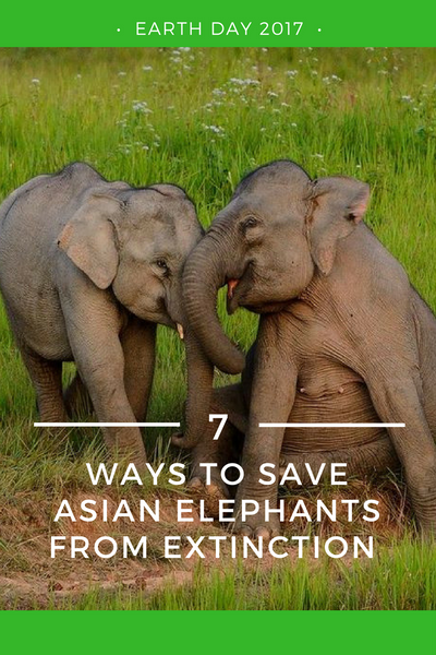 7 Ways to Help Save Asian Elephants from Extinction