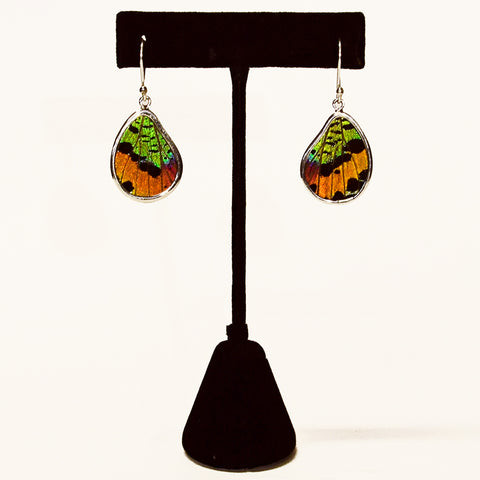 real butterfly wing earrings amazon jungle