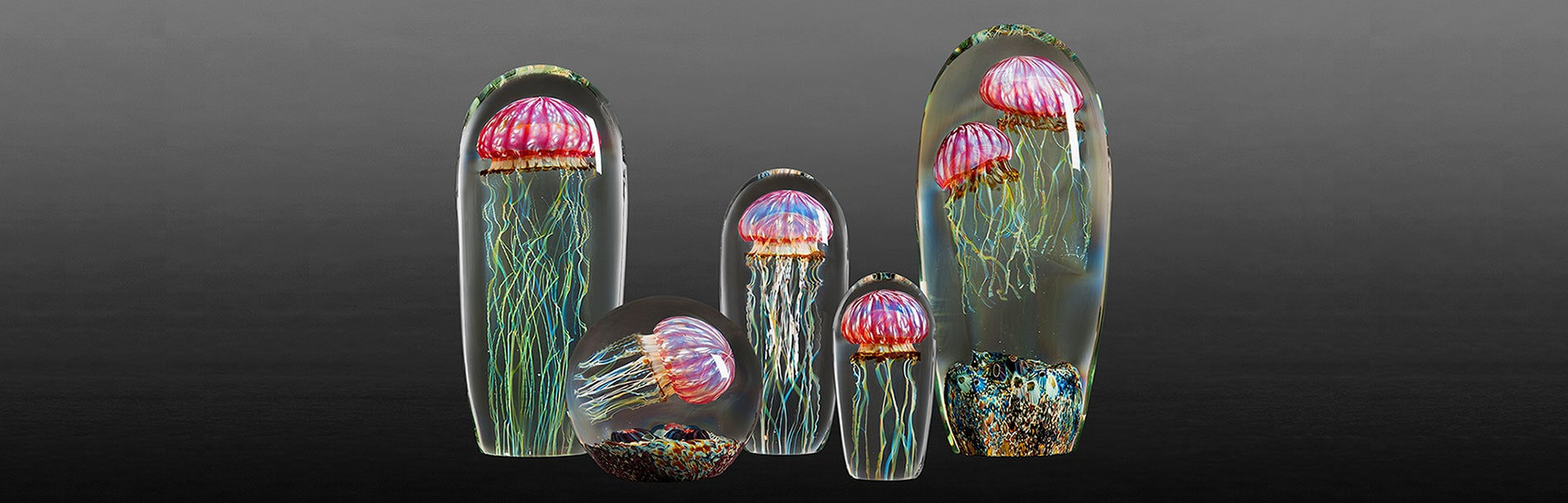 Jellyfish collections