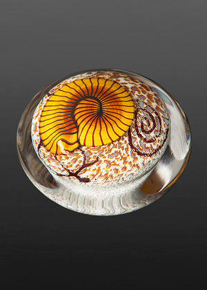 Gold Nautilus on Cream Paperweight