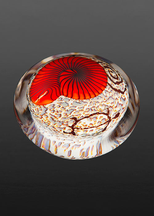 Red Nautilus on Cream Paperweight