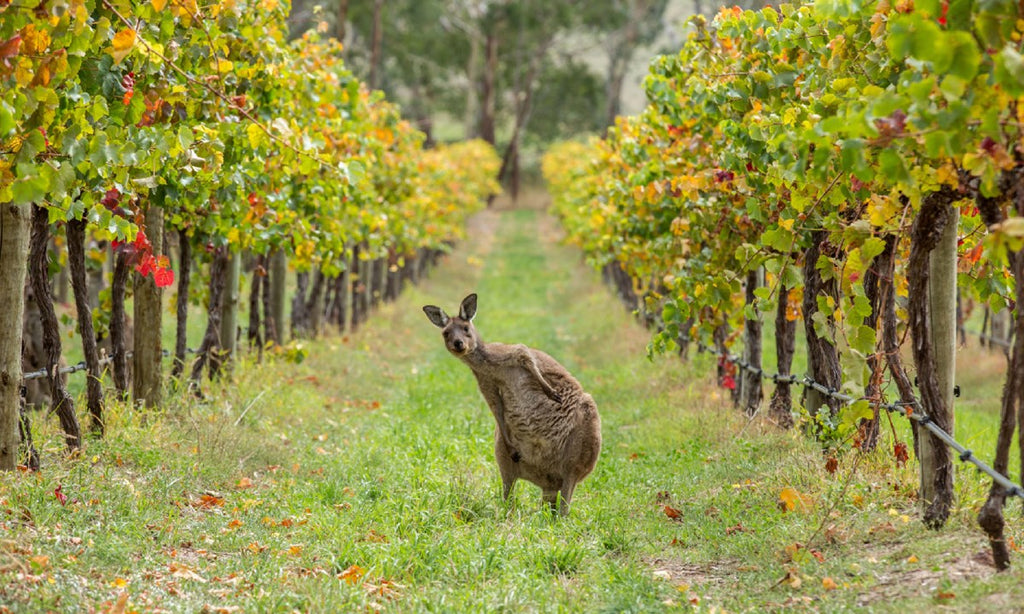 The Best of Australia's Wine Regions