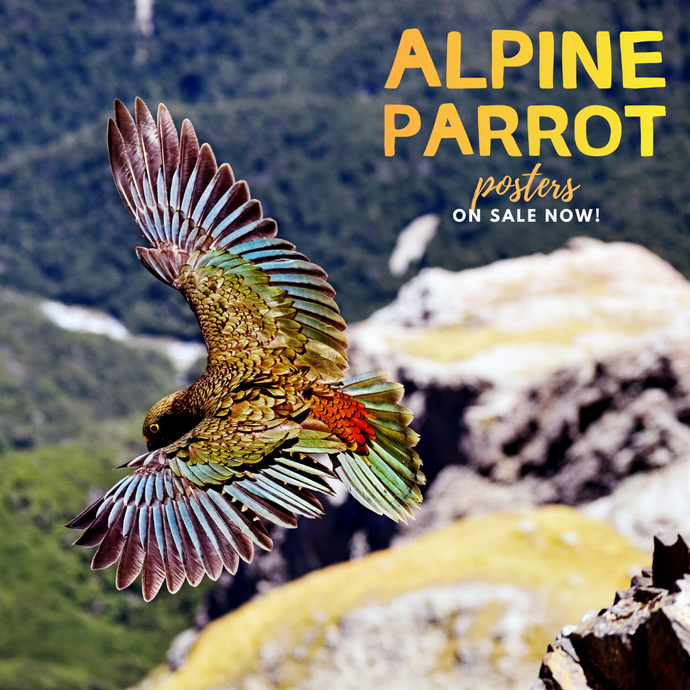 On sale: Alpine Parrot posters!