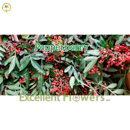Pepperberry