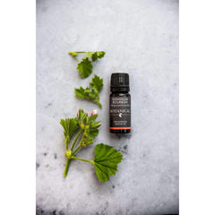 Geranium Essential Oil Bourbon