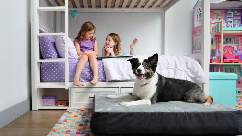 5 Tricks to Help Your Pup Choose The Dog Bed