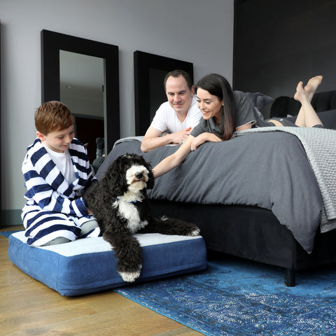 dog on dog bed with owners petting them