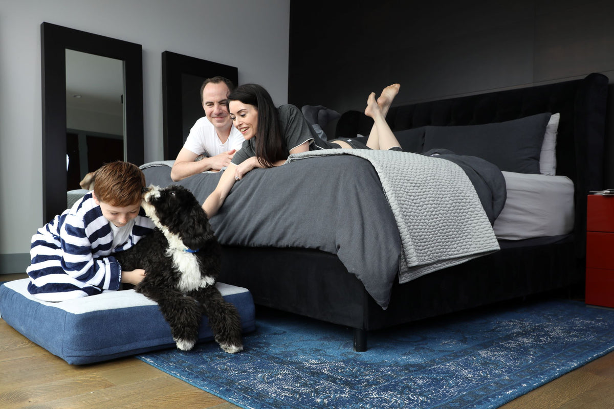 Dog with family in bed