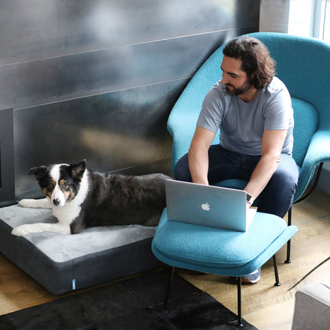 Man on laptop with dog next to him on his Dozer dog bed.