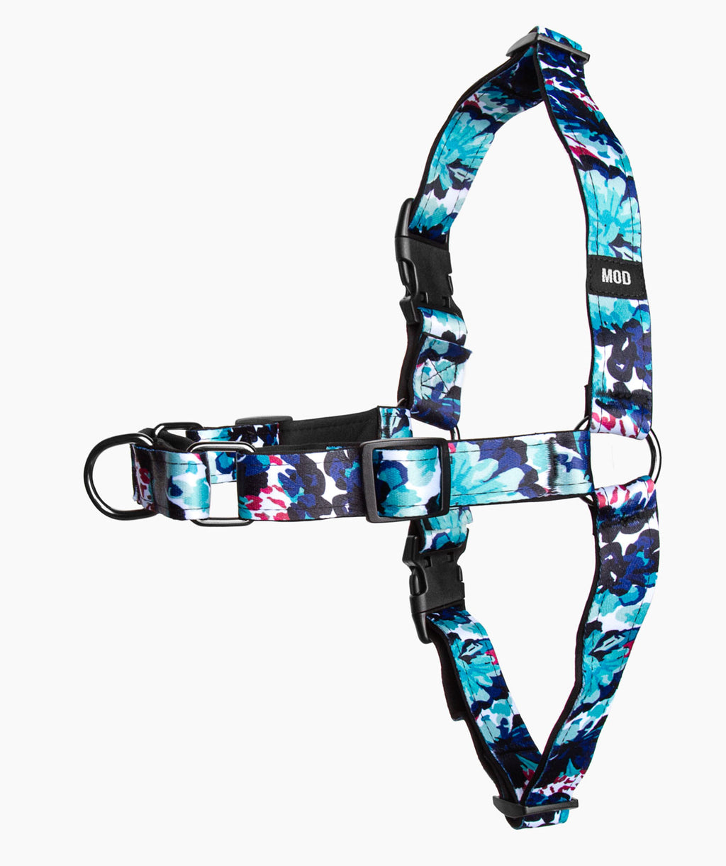 Dreams of Azul No-Pull Harness