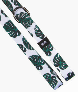 Monstera Deliciosa Set - MODLEASH