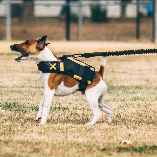 XDOG Resistance Band for Dogs (6') - Strengthen Core Muscle, Promote Muscle Growth *