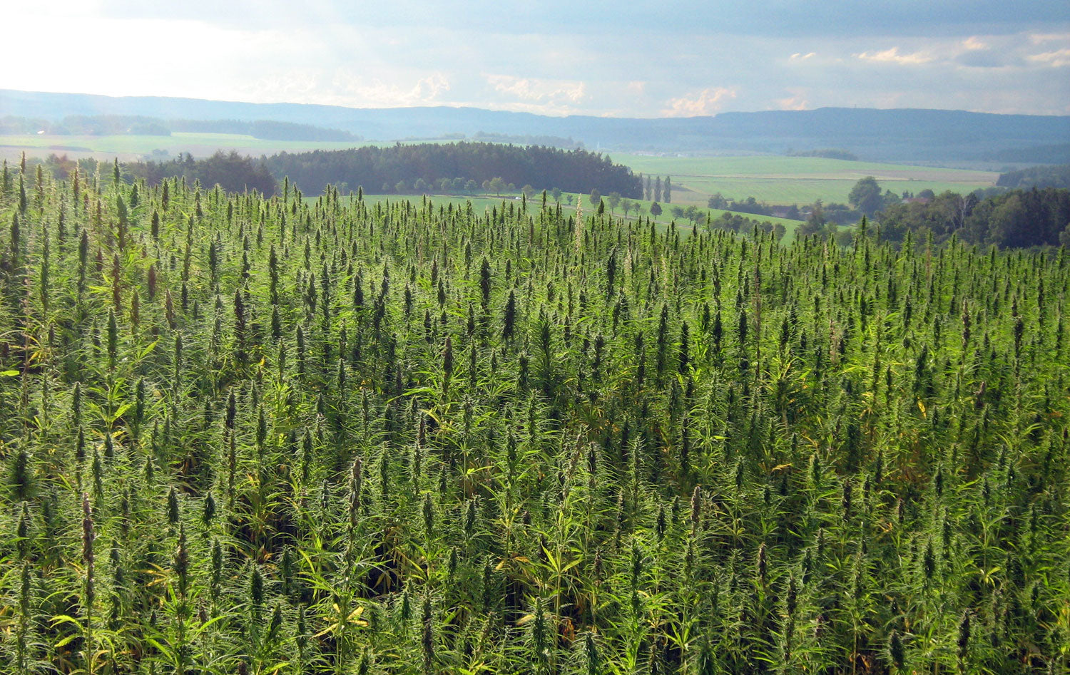 10 Things You Probably Didn't Know About Hemp