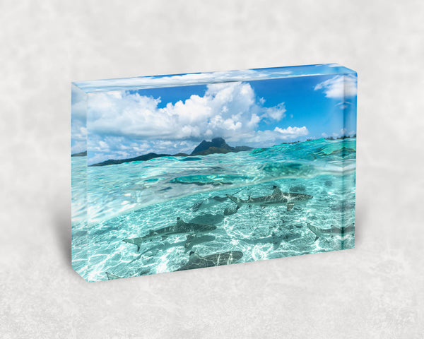 Bora Bora Shark & Ray Acrylic Block