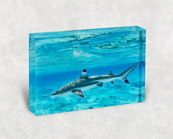 Swimming Buddy Acrylic Block