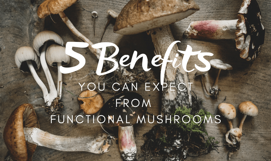 5 Benefits You Can Expect From Functional Mushrooms