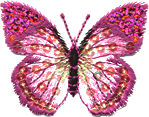 butterfly large pink thread applique
