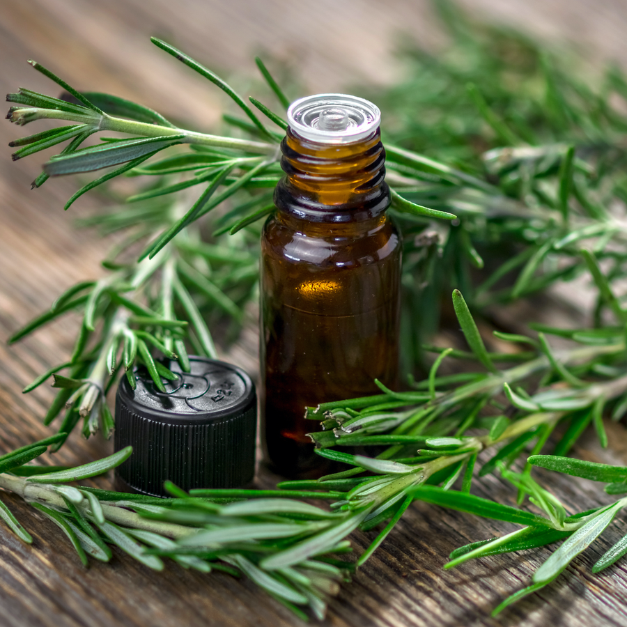 Rosemary Essential Oil for Aromatherapy | 100% Pure Steam Distilled Essential Oil