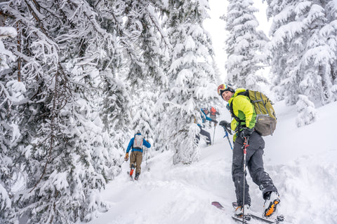 backcountry skier in snowy trees