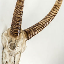 Load image into Gallery viewer, Goat Skull Wall Decor