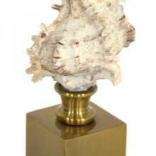 Load image into Gallery viewer, Zentique Seashell on Gold Base