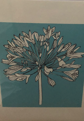 Agapanthus & Daisy Greetings Card - K010