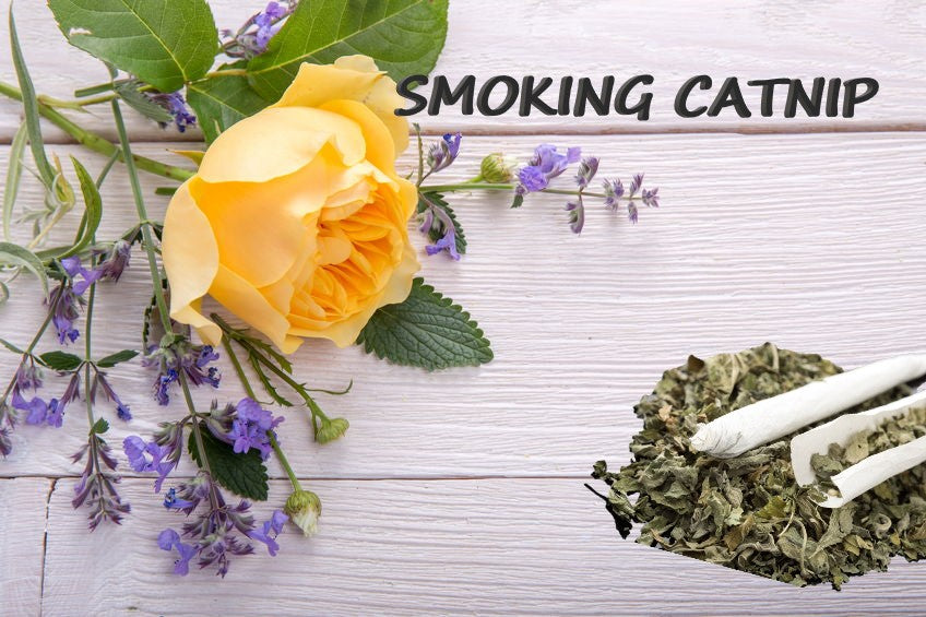 SMOKING CATNIP WITH HERBAL BLENDS