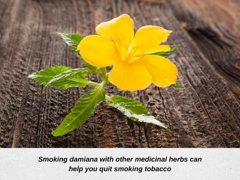 Smoking damiana high with cannabis