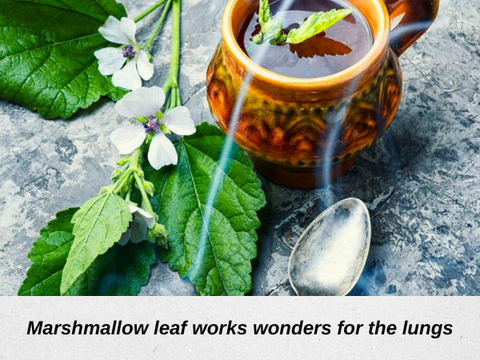 marshmallow leaf benefits