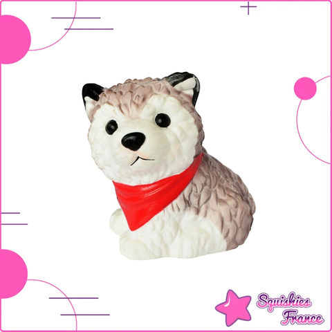 Squishy husky - Animaux - Squishies France