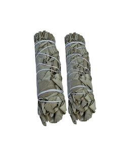 Mini White Sage (twin pack)