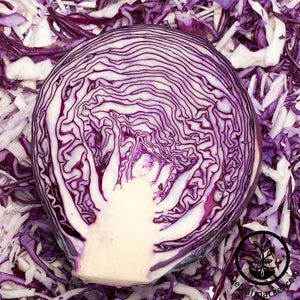 Mammoth Red Rock Cabbage