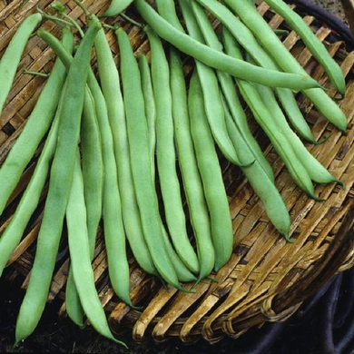 Kentucky Wonder Brown Pole Bean