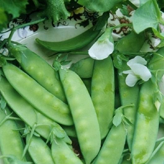 Dwarf Grey Sugar Snow Peas