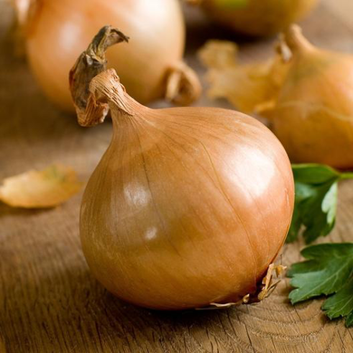 Texas Early Grano Short Day Onion
