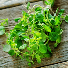 Load image into Gallery viewer, Common Oregano